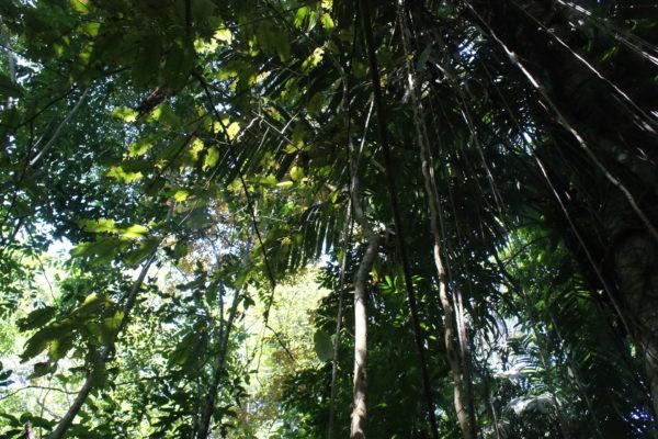 Jungle- Eden jungle lodge - bocas del Toro - Panama