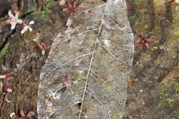 Jungle - Eden Jungle Lodge - Bocas del Toro- Panama