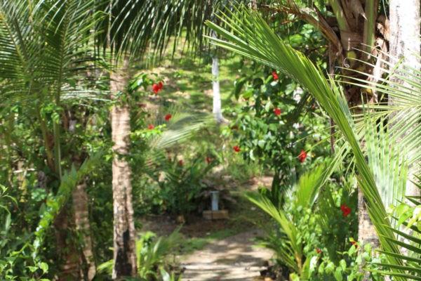 Eden jungle lodge - Bocas del Toro - Panama